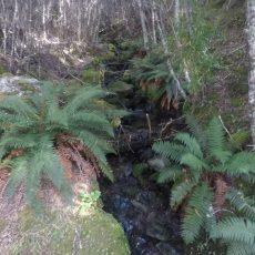 Day 130, Te Araroa Trail, 3000 Km zu Fuß durch Neuseeland